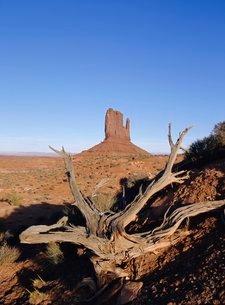 Left Mitten Butte, Monument Valley, Arizona, USAの写真素材 [FYI03761536]