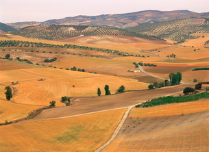 Agricultural landscape of fields, farms and olive trees in the background, in Andaluciaの写真素材 [FYI03761768]