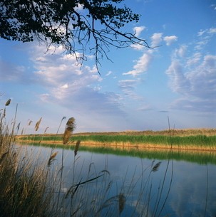 The Kara Kum canal brings water from the River Amu Darya (Oxus), to irrigate cotton fields, Turkmeniの写真素材 [FYI03761855]