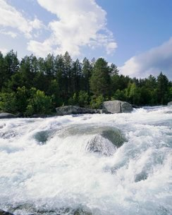 Buskerrud, river near Gol, Norway, Scandinaviaの写真素材 [FYI03761936]