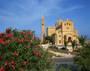 Oleander bush in front of the Ta Pinu Cathedral at Gozo, Maltaの写真素材 [FYI03761959]