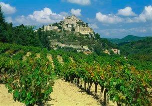 Vineyard, Entrechaux, Vaucluseの写真素材 [FYI03761973]