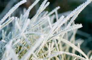 Close up of frost covered grassの写真素材 [FYI03762056]