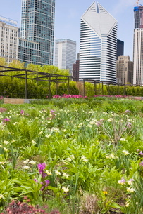 The Lurie Garden, Millennium Park, Chicago, Illinois'の写真素材 [FYI03762076]