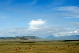 Ngorongoro Conservation Area, Tanzaniaの写真素材 [FYI03762222]