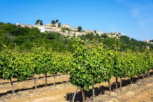 Menerbes and vines, Luberonの写真素材 [FYI03762335]