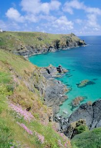 Thrift flowering on the cliffs, The Lizard, Cornwallの写真素材 [FYI03762508]