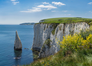 The Chalk cliffs of Ballard Down with The Pinnacles Stack in Swanage Bay, near Handfast Point, Isleの写真素材 [FYI03762584]