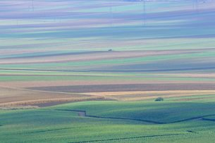 Agricultural landscape, Champagneの写真素材 [FYI03762721]