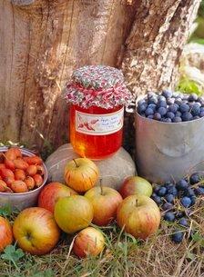 Apple, Sloe and Rosehip jam and fruitの写真素材 [FYI03762737]