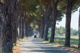 Pine tree lined road with small Piaggio three wheeled van travelling along it, Tuscanyの写真素材 [FYI03762847]