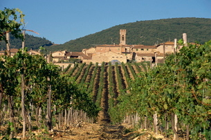 Vineyard in the Chianti Classico region north of Siena, Tuscanyの写真素材 [FYI03762958]