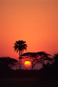 Tranquil scene of trees silhouetted against the sun at sunset, Okavango Deltaの写真素材 [FYI03762983]