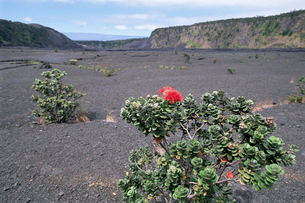 Halemaumau crater, Big Island, Hawaii, Hawaiian Islandsの写真素材 [FYI03762992]
