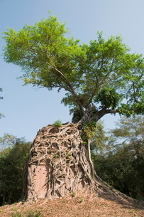 Temples in the ancient pre Angkor capital of Chenla, Cambodia, Indochina, Southeast Asiaの写真素材 [FYI03763077]