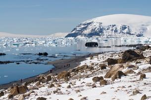 Brown Bluff, Antarctic Peninsula, Antarcticaの写真素材 [FYI03763378]