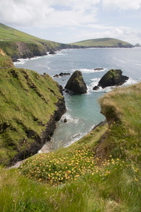 View from Slea Head Drive near Dunquin, Dingle Peninsula, County Kerry, Munsterの写真素材 [FYI03763553]