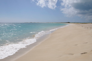 Wonderful sandy beach, Barbuda, Antigua and Barbuda, Leeward Islands, Caribbeanの写真素材 [FYI03763659]