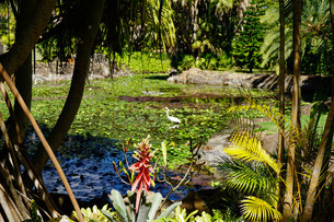 Nevis Botanical Garden, Nevis, St. Kitts and Nevis, Leeward Islands, Caribbeanの写真素材 [FYI03763744]