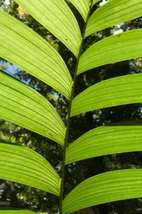 Rainforest vegitation, Hanging Bridges walk, Arenal, Costa Ricaの写真素材 [FYI03764049]