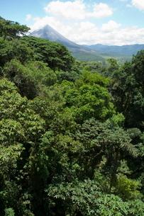 Rainforest vegitation, Hanging Bridges walk, Arenal, Costa Ricaの写真素材 [FYI03764050]