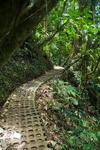 Hanging Bridges a walk through the rainforest, Arenal, Costa Ricaの写真素材 [FYI03764051]