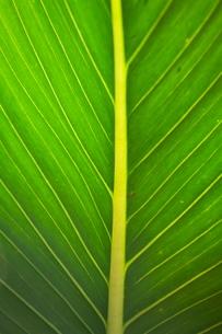Monteverde Cloud Forest Reserve, Monteverde, Costa Ricaの写真素材 [FYI03764068]