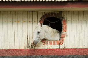Horse in stables on way to Monteverde, Costa Ricaの写真素材 [FYI03764069]