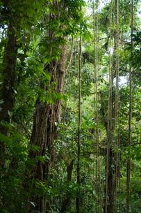 Monteverde Cloud Forest Reserve, Monteverde, Costa Ricaの写真素材 [FYI03764070]
