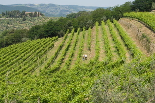 Typical Tuscan view around the area of Lamole, near Greve, Chianti, Tuscanyの写真素材 [FYI03764340]