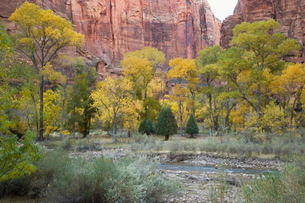 Zion National Parkの写真素材 [FYI03764369]