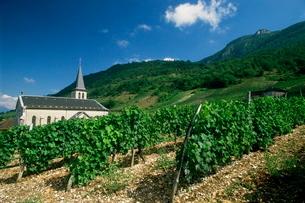 Jonjieux (Jonzieux), Savoie vineyards, Rhone Alpesの写真素材 [FYI03764872]