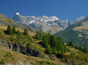 Landscape of trees and mountains in the Vanoise, Savoie (Savoy) in the Rhone-Alpes, French Alpsの写真素材 [FYI03764876]
