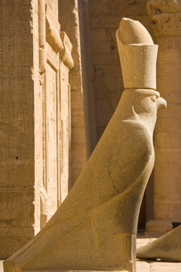 Statue of Horus the falcon outside the doorway to the sandstone Temple of Horus at Edfuの写真素材 [FYI03765304]