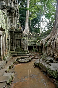 Ta Prohm temple dating from the mid 12th to early 13th centuries, Angkor, Siem Reap, Cambodia, Indocの写真素材 [FYI03765840]