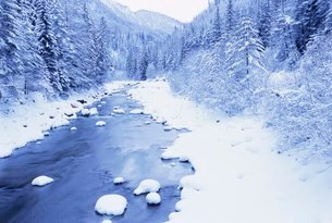 Frozen river and snow covered treesの写真素材 [FYI03766086]