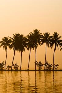 Palm Dyke, Allepy, Keralaの写真素材 [FYI03766485]