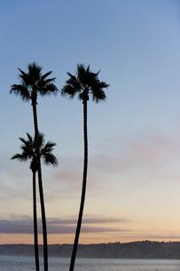 La Jolla, San Diegoの写真素材 [FYI03766615]