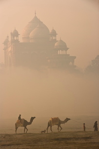 Camels at Taj Mahal, Agra, Uttar Pradesh stateの写真素材 [FYI03766774]