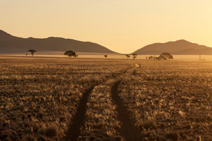Track at sunset in the Namib Desert, Namibiaの写真素材 [FYI03766905]