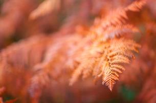 Autumn colours, Devonの写真素材 [FYI03766998]