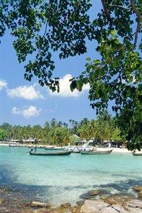 Phi Phi Islands, Phuket, Thailandの写真素材 [FYI03767226]