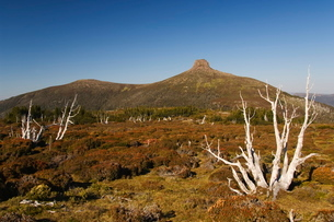 View of Mount Pelion East, 1433m, from  Mount Ossa, on the overland track in Cradle Mountain Lake Stの写真素材 [FYI03767291]