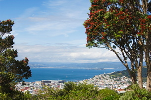 Panoramic city centre view overlooking Oriental Bay and Wellington Harbour, Wellington, North Islandの写真素材 [FYI03767297]