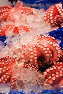 Octopus at Tsukiji fish market, Tokyo, Honshu Island, Japanの写真素材 [FYI03767410]