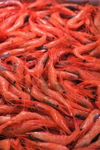 Shrimp at Tsukiji fish market, Tokyo, Honshu Island, Japanの写真素材 [FYI03767412]