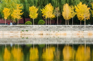 Autumn colours reflected in the moat of the Forbidden City Palace Museum, Beijingの写真素材 [FYI03767438]