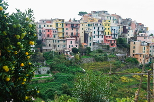 Pastel coloured houses, village of Corniglia, Cinque Terre, Liguriaの写真素材 [FYI03767660]