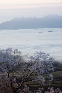 Sunrise over snow covered Towada Hachimantai National Park, Iwate prefecture, Japanの写真素材 [FYI03767668]