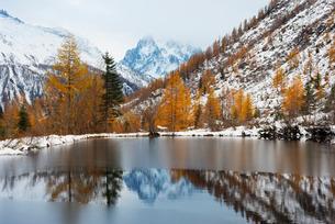 Autumn colours at Col de Montet lake, Chamonix, Rhone Alps, Haute Savoie, French Alpsの写真素材 [FYI03768024]